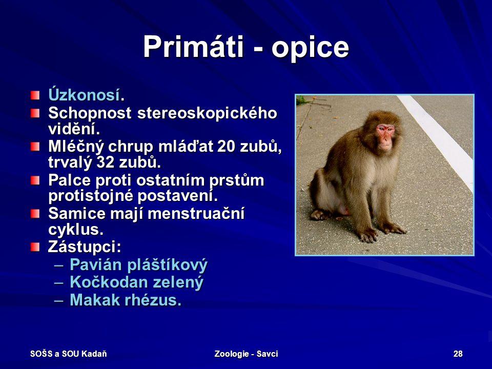 Primáti - opice Úzkonosí. Schopnost stereoskopického vidění.