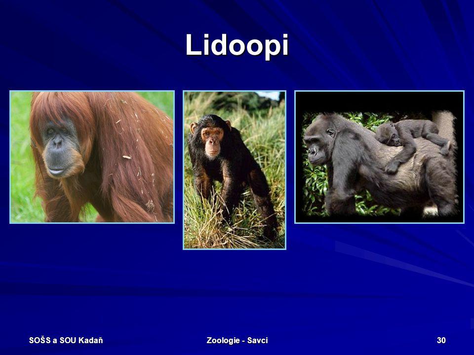 Lidoopi SOŠS a SOU Kadaň Zoologie - Savci