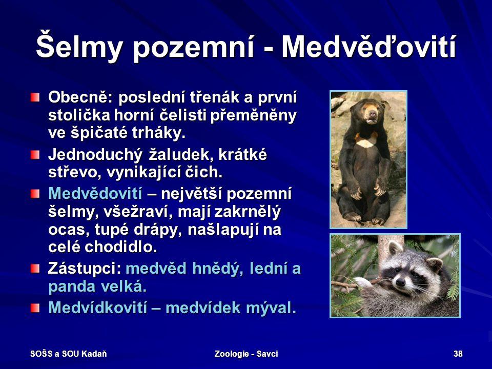 Šelmy pozemní - Medvěďovití