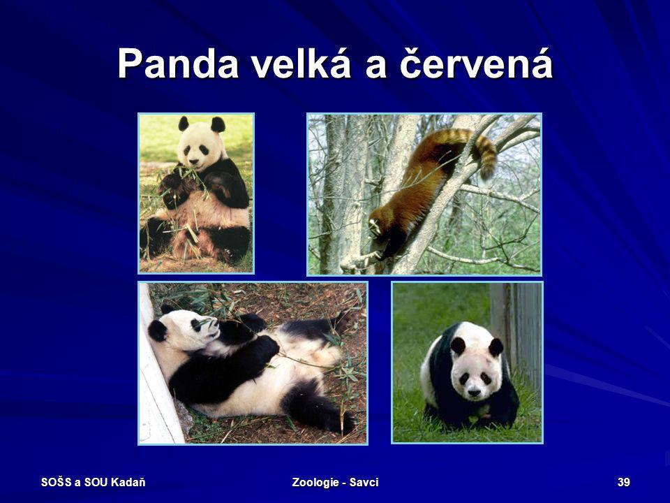 Panda velká a červená SOŠS a SOU Kadaň Zoologie - Savci