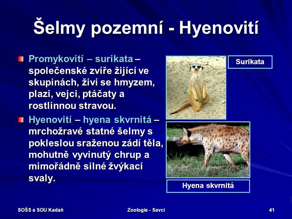 Šelmy pozemní - Hyenovití