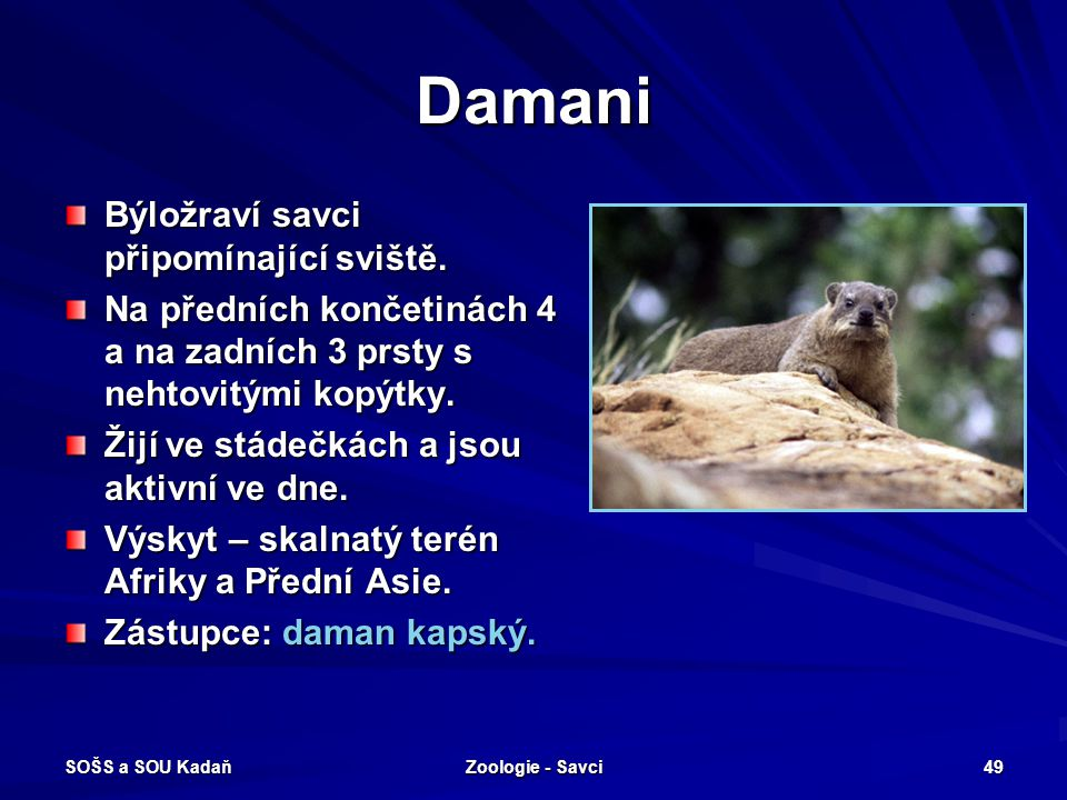 Damani Býložraví savci připomínající sviště.