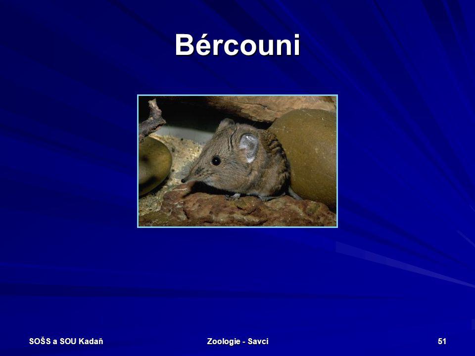 Bércouni SOŠS a SOU Kadaň Zoologie - Savci