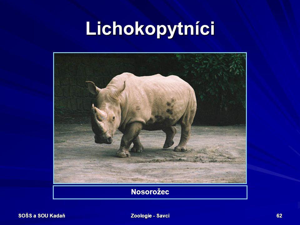 Lichokopytníci Nosorožec SOŠS a SOU Kadaň Zoologie - Savci
