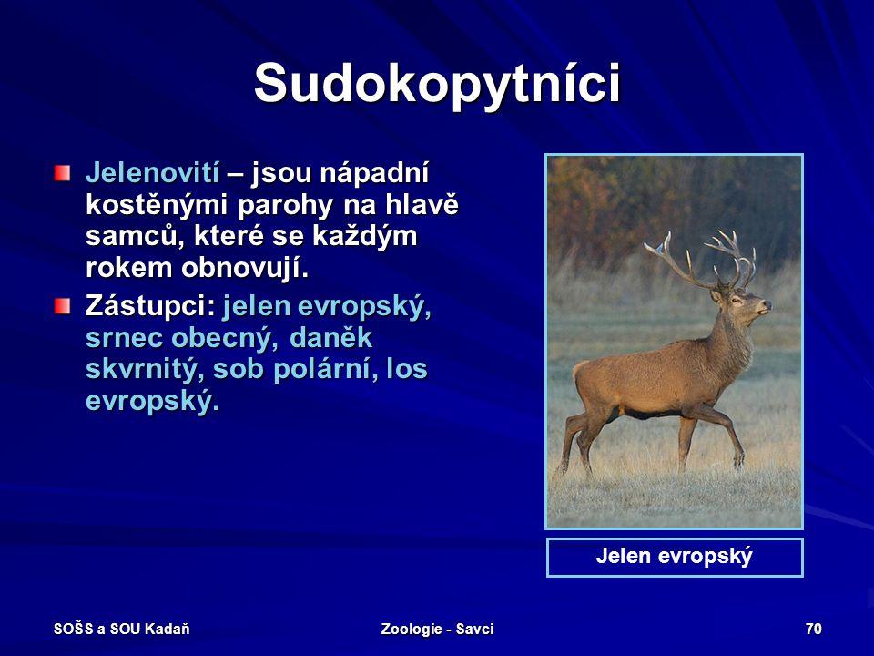 Sudokopytníci Jelenovití – jsou nápadní kostěnými parohy na hlavě samců, které se každým rokem obnovují.