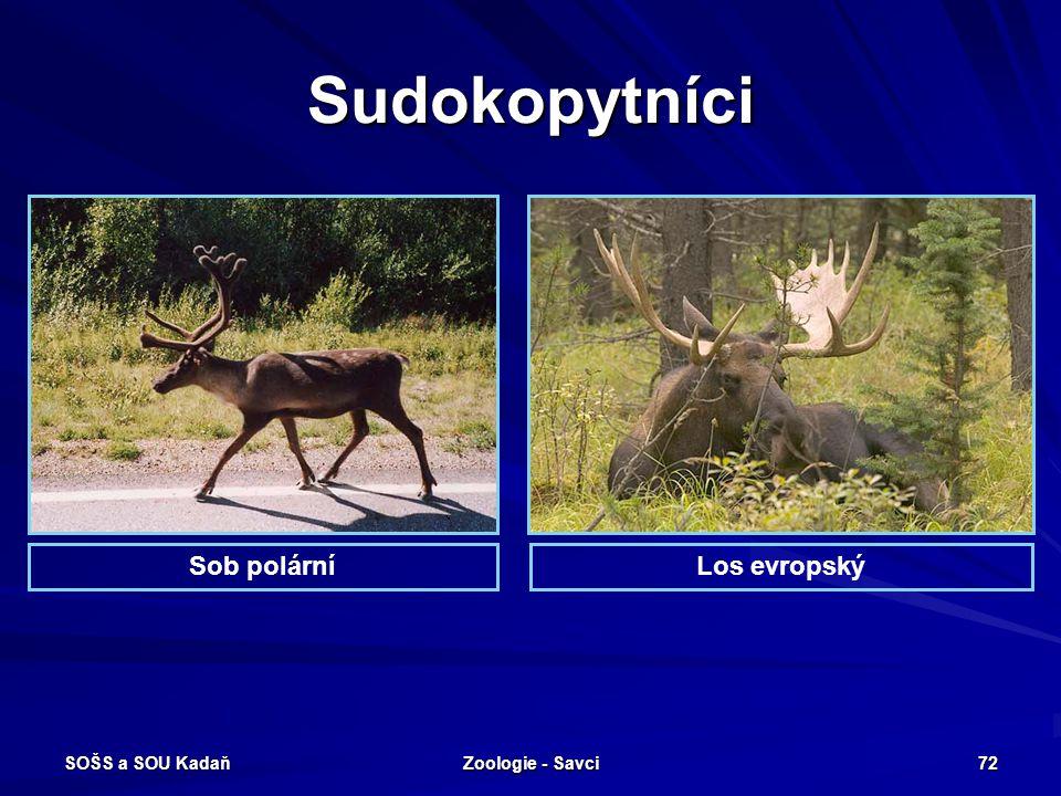 Sudokopytníci Sob polární Los evropský SOŠS a SOU Kadaň