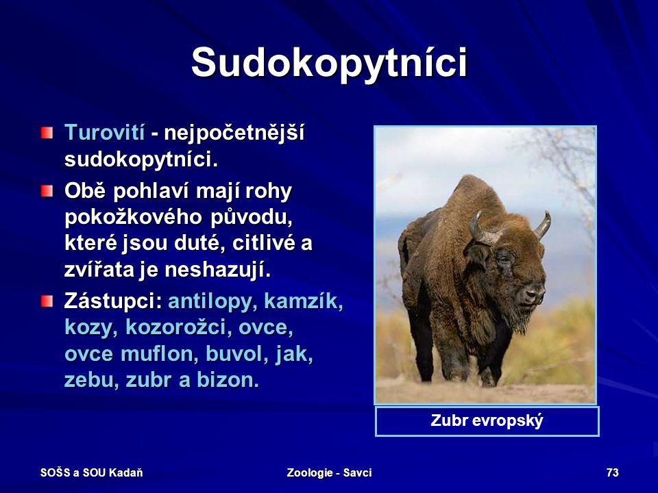 Sudokopytníci Turovití - nejpočetnější sudokopytníci.
