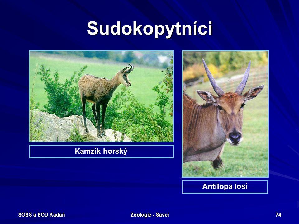 Sudokopytníci Kamzík horský Antilopa losí SOŠS a SOU Kadaň