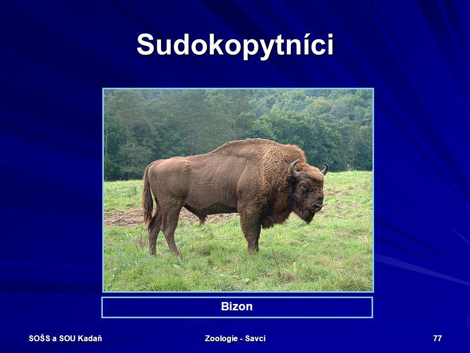 Sudokopytníci Bizon SOŠS a SOU Kadaň Zoologie - Savci