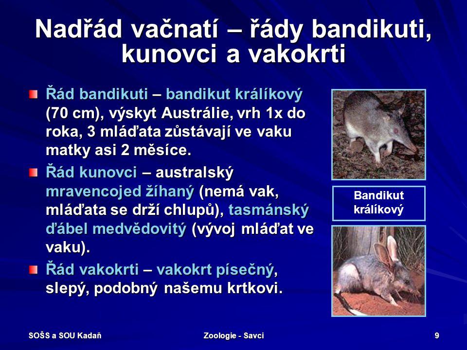 Nadřád vačnatí – řády bandikuti, kunovci a vakokrti