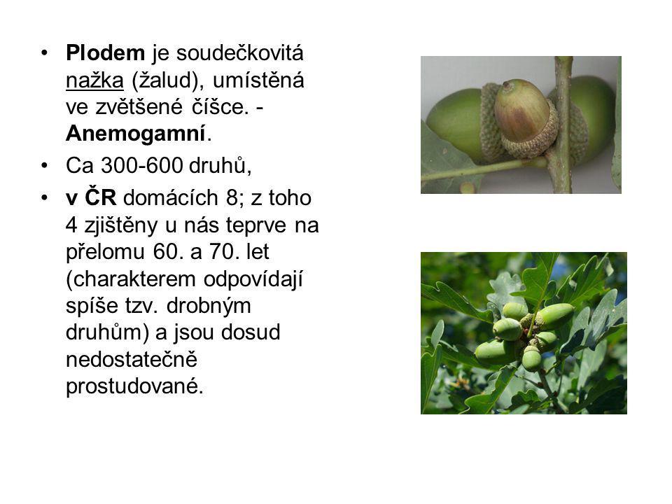 Plodem je soudečkovitá nažka (žalud), umístěná ve zvětšené číšce