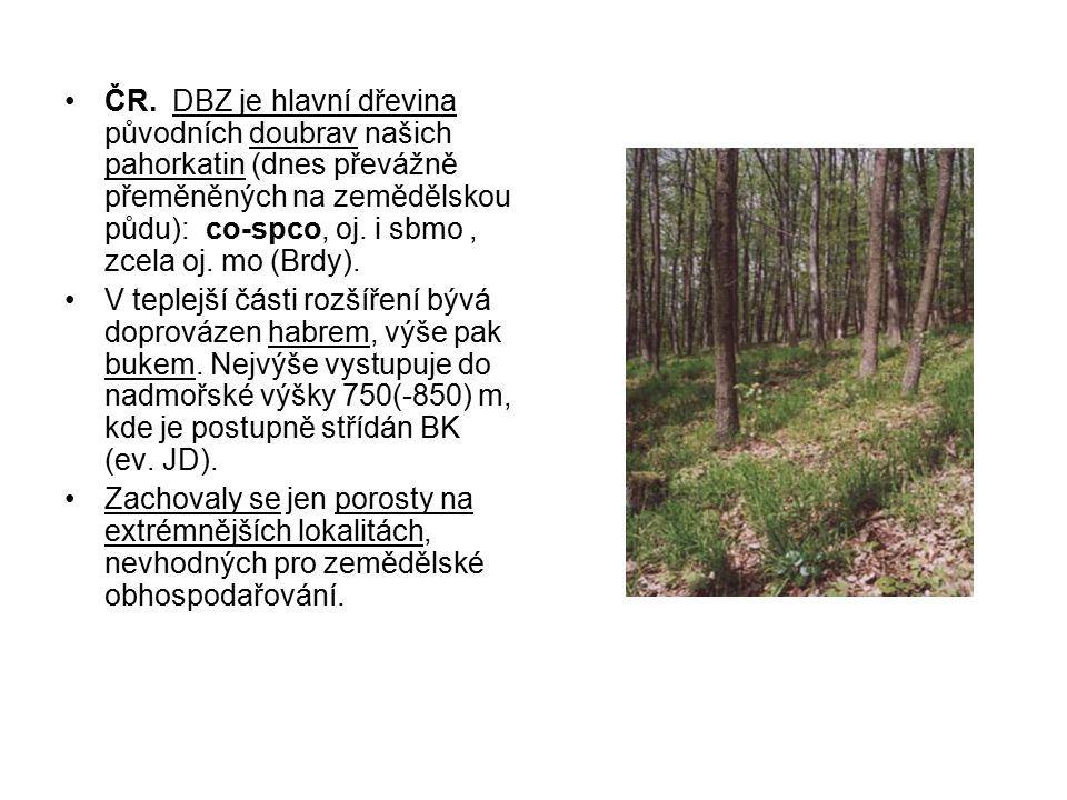 ČR. DBZ je hlavní dřevina původních doubrav našich pahorkatin (dnes převážně přeměněných na zemědělskou půdu): co-spco, oj. i sbmo , zcela oj. mo (Brdy).