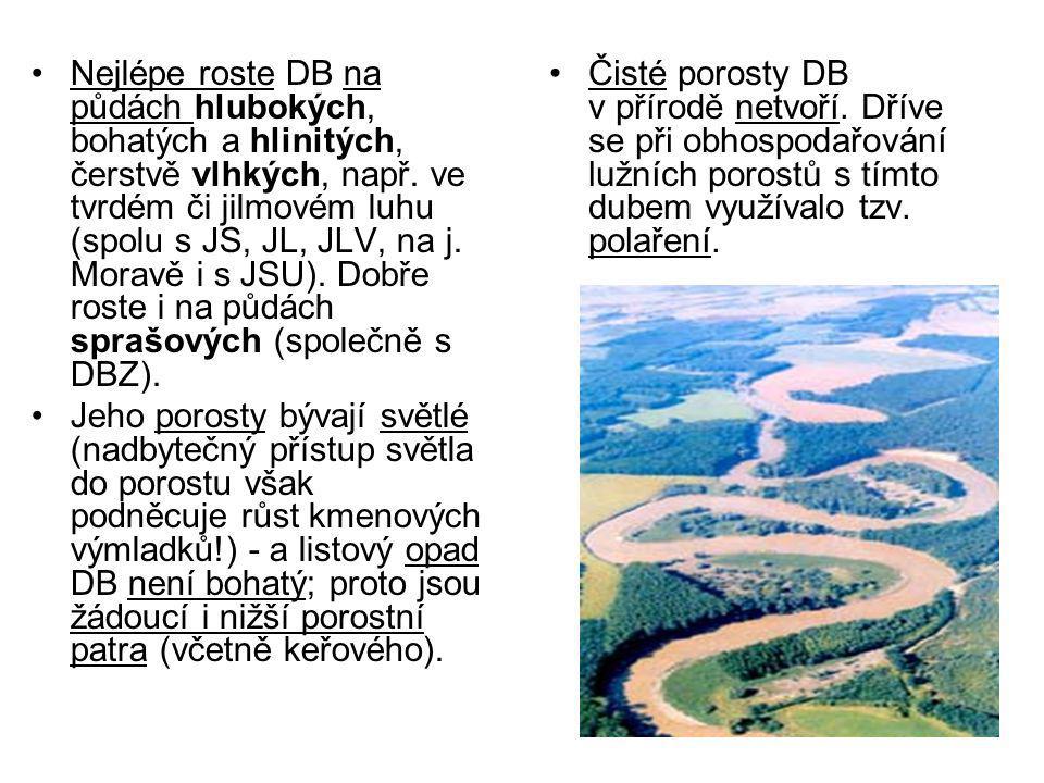 Nejlépe roste DB na půdách hlubokých, bohatých a hlinitých, čerstvě vlhkých, např. ve tvrdém či jilmovém luhu (spolu s JS, JL, JLV, na j. Moravě i s JSU). Dobře roste i na půdách sprašových (společně s DBZ).