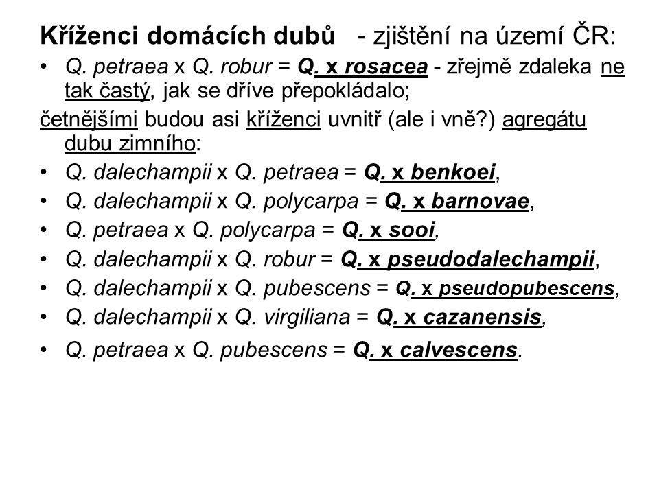 Kříženci domácích dubů - zjištění na území ČR: