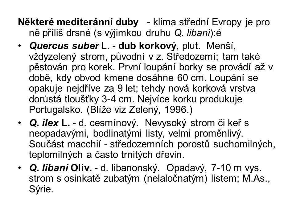Některé mediteránní duby - klima střední Evropy je pro ně příliš drsné (s výjimkou druhu Q. libani):é