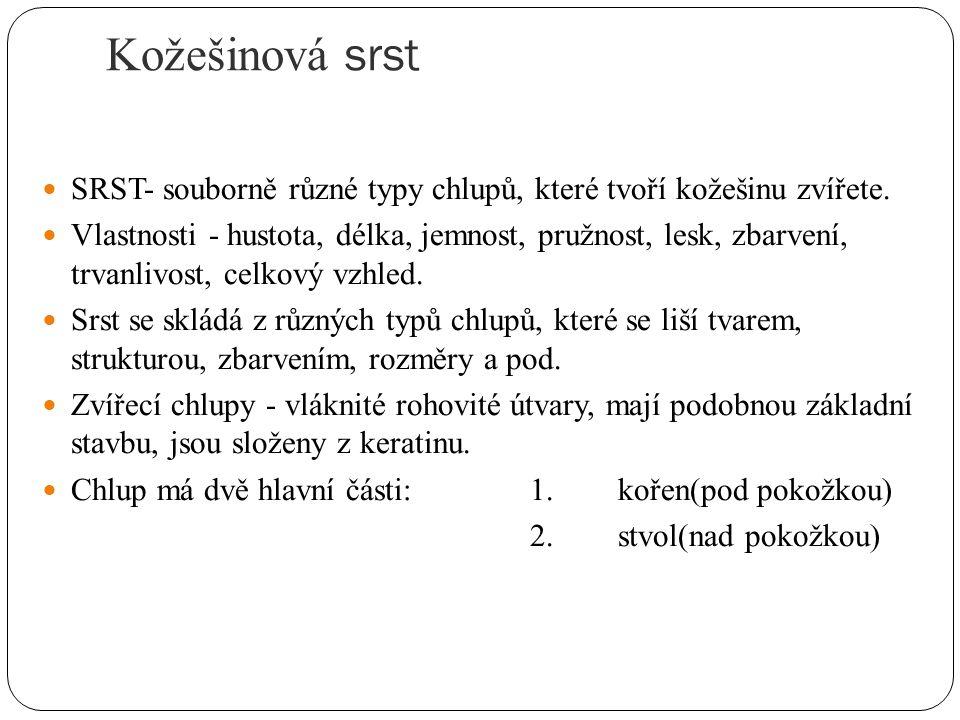 Kožešinová srst SRST- souborně různé typy chlupů, které tvoří kožešinu zvířete.