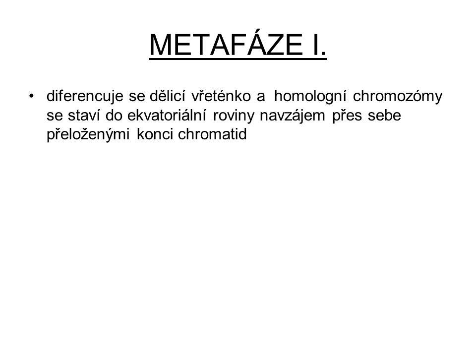 METAFÁZE I.