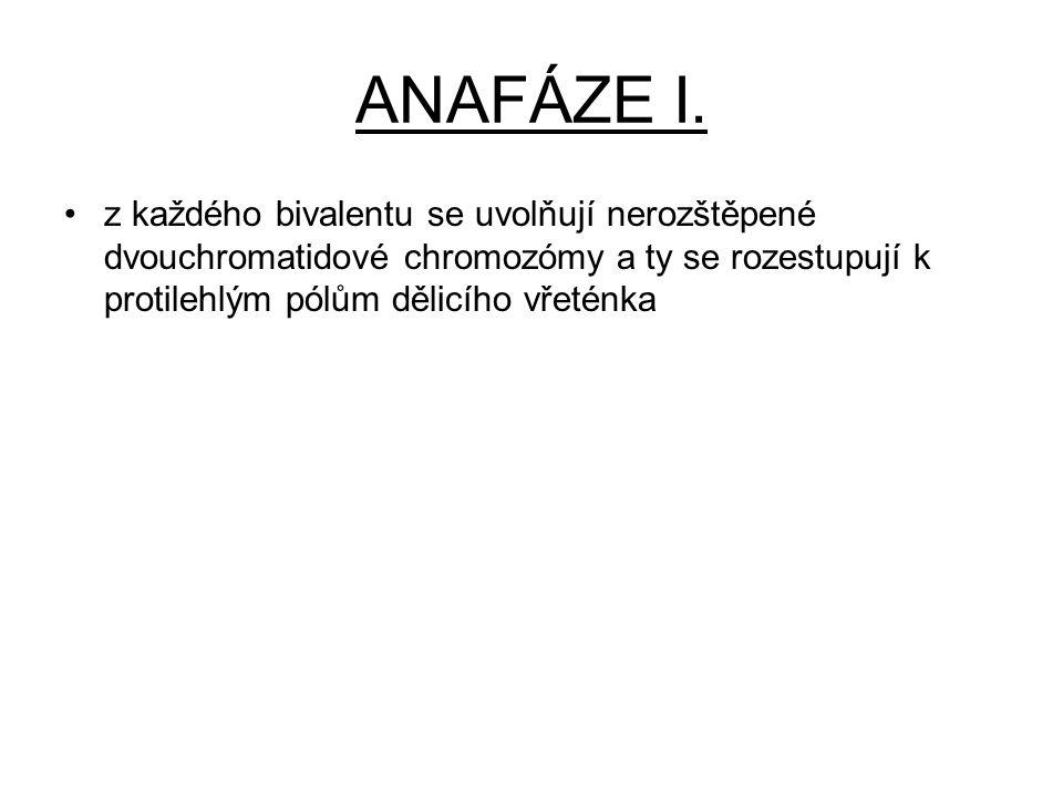 ANAFÁZE I.