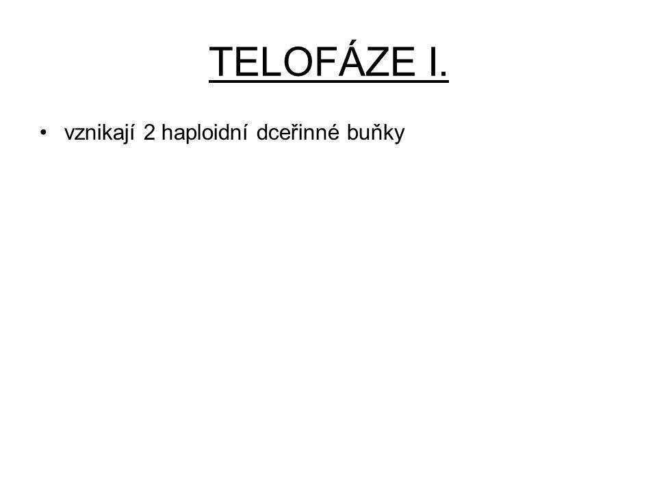 TELOFÁZE I. vznikají 2 haploidní dceřinné buňky