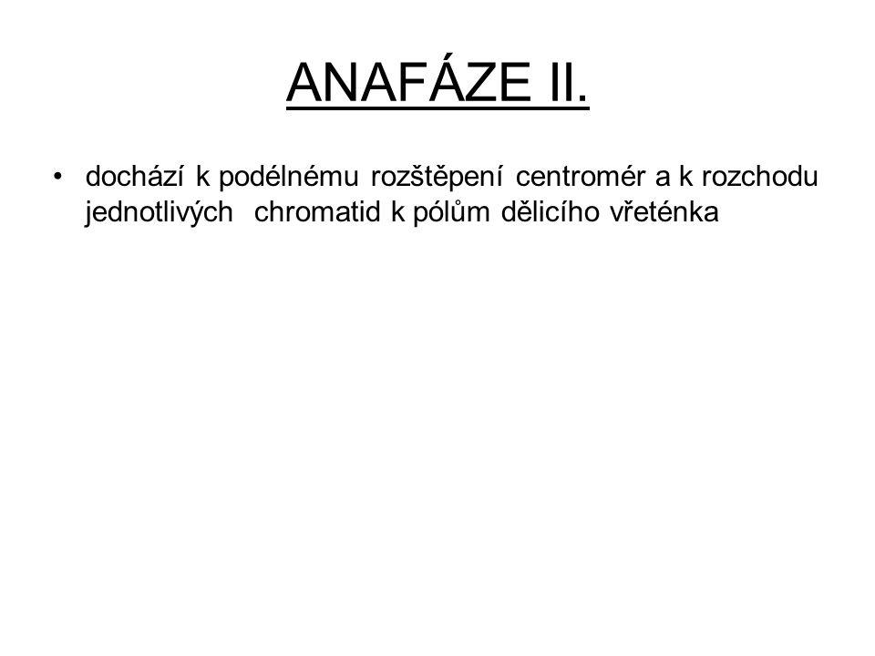 ANAFÁZE II.