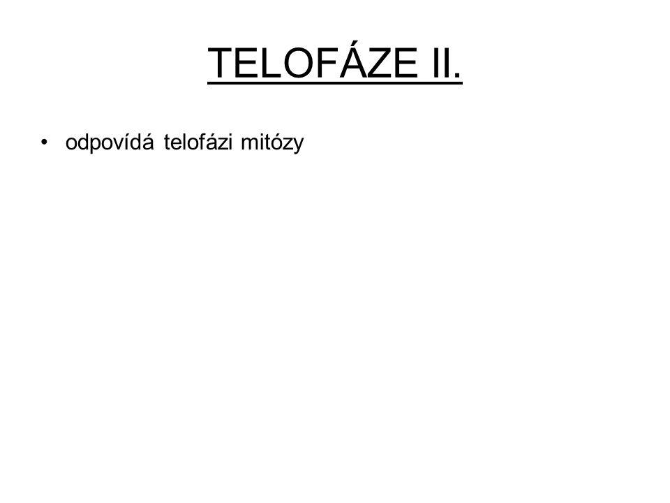 TELOFÁZE II. odpovídá telofázi mitózy