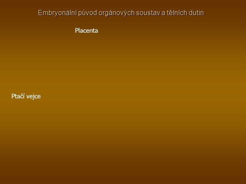 Embryonální původ orgánových soustav a tělních dutin