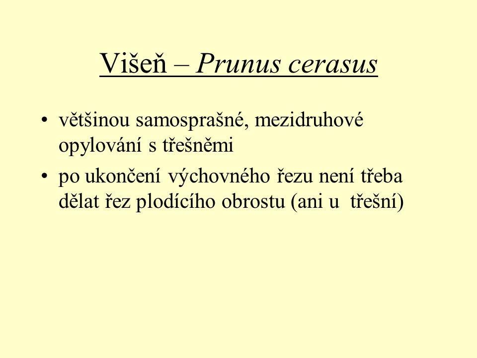 Višeň – Prunus cerasus většinou samosprašné, mezidruhové opylování s třešněmi.