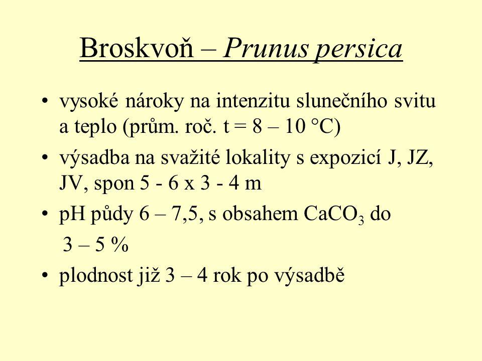 Broskvoň – Prunus persica