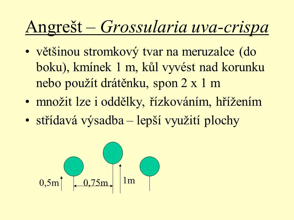 Angrešt – Grossularia uva-crispa