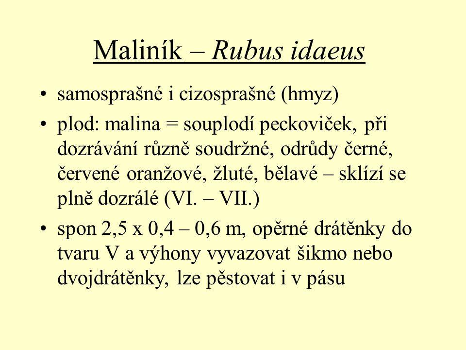 Maliník – Rubus idaeus samosprašné i cizosprašné (hmyz)
