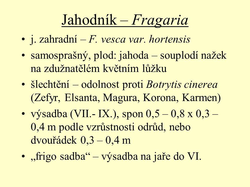 Jahodník – Fragaria j. zahradní – F. vesca var. hortensis