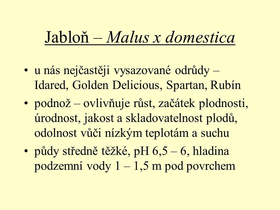 Jabloň – Malus x domestica