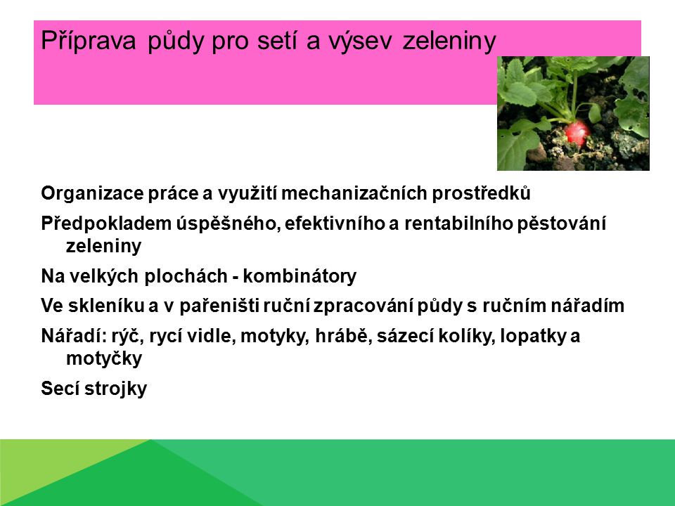Příprava půdy pro setí a výsev zeleniny