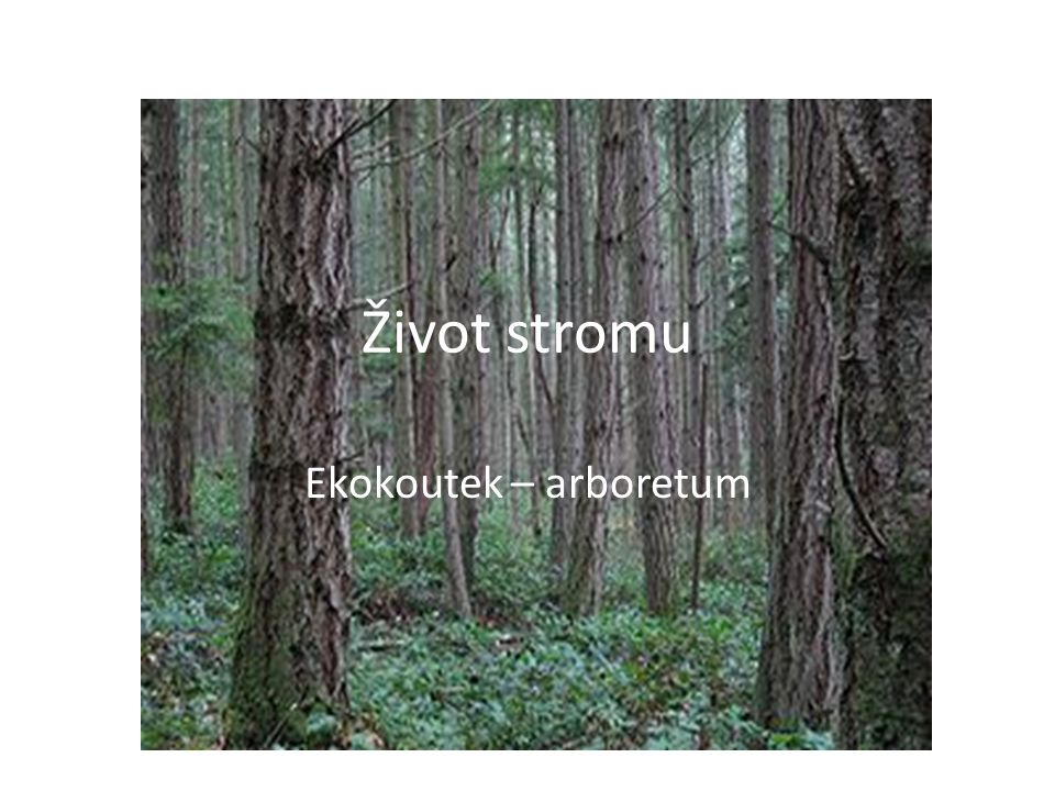Život stromu Ekokoutek – arboretum