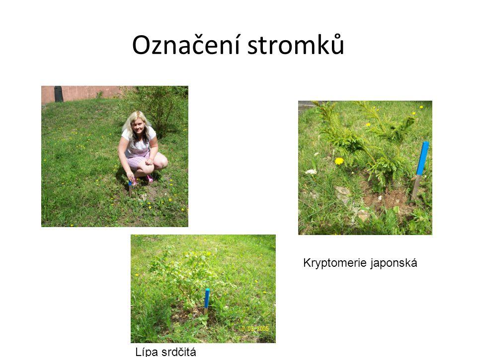 Označení stromků Kryptomerie japonská Lípa srdčitá