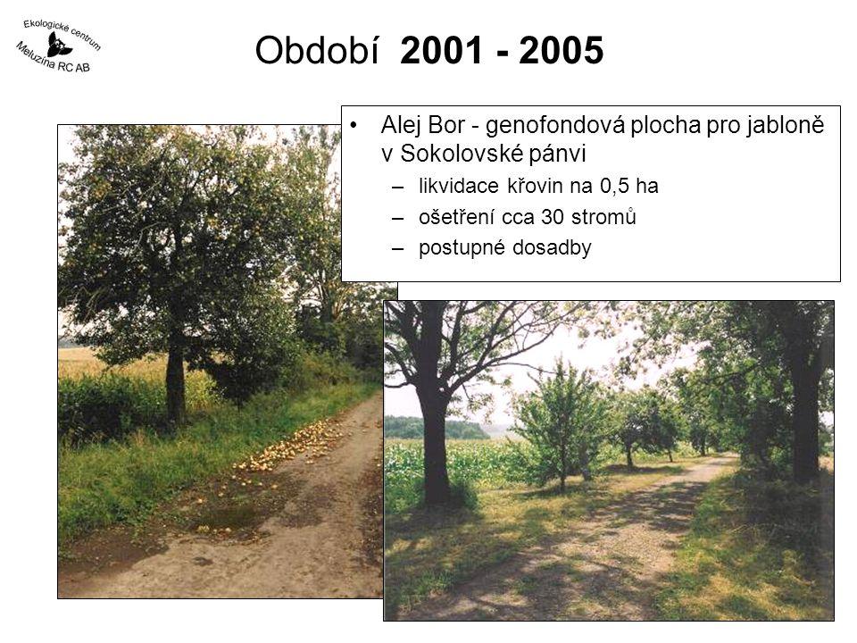 Období 2001 - 2005 Alej Bor - genofondová plocha pro jabloně v Sokolovské pánvi. likvidace křovin na 0,5 ha.
