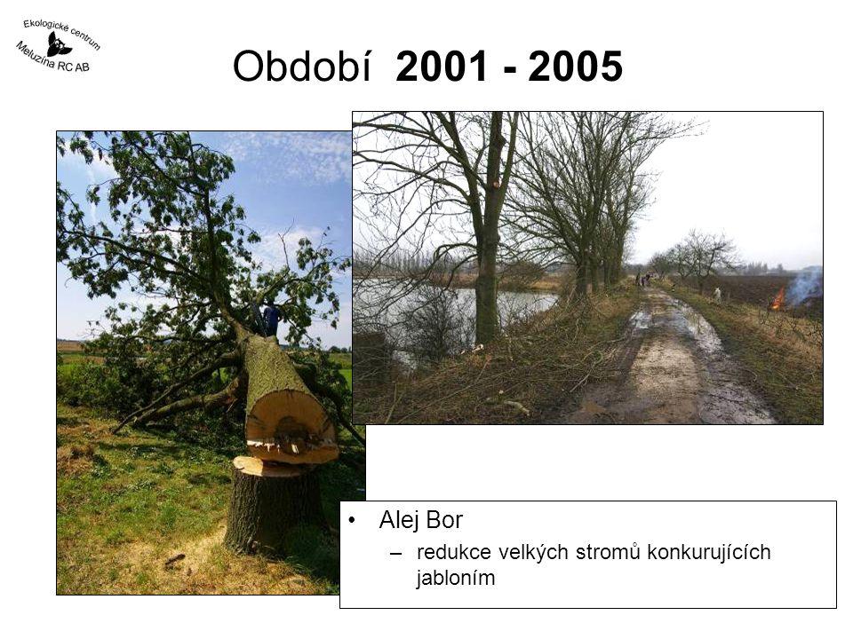 Období 2001 - 2005 Alej Bor redukce velkých stromů konkurujících jabloním