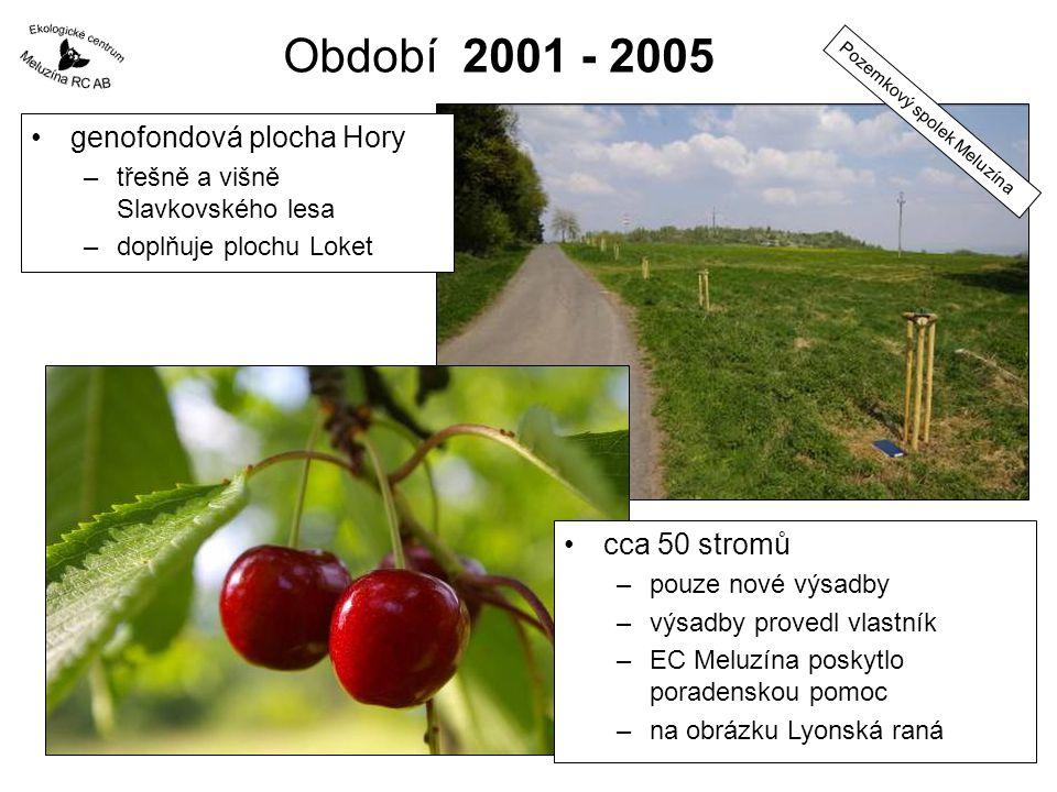 Období 2001 - 2005 genofondová plocha Hory cca 50 stromů