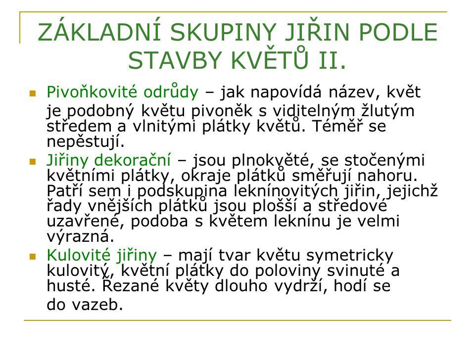 ZÁKLADNÍ SKUPINY JIŘIN PODLE STAVBY KVĚTŮ II.