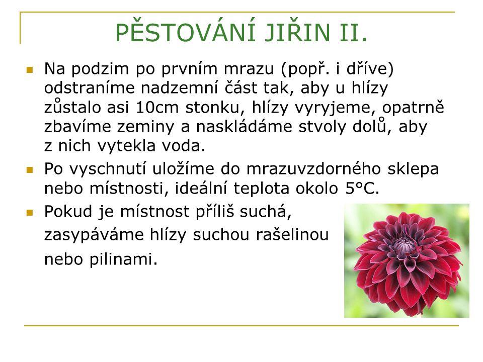 PĚSTOVÁNÍ JIŘIN II.