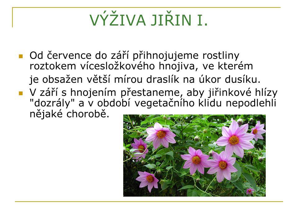 VÝŽIVA JIŘIN I. Od července do září přihnojujeme rostliny roztokem vícesložkového hnojiva, ve kterém.