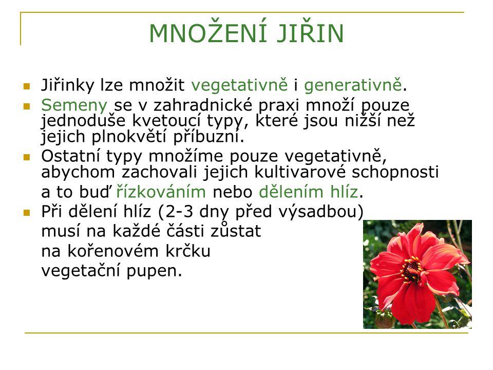 MNOŽENÍ JIŘIN Jiřinky lze množit vegetativně i generativně.