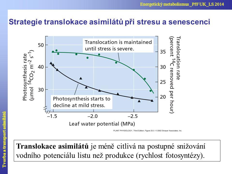 Strategie translokace asimilátů při stresu a senescenci
