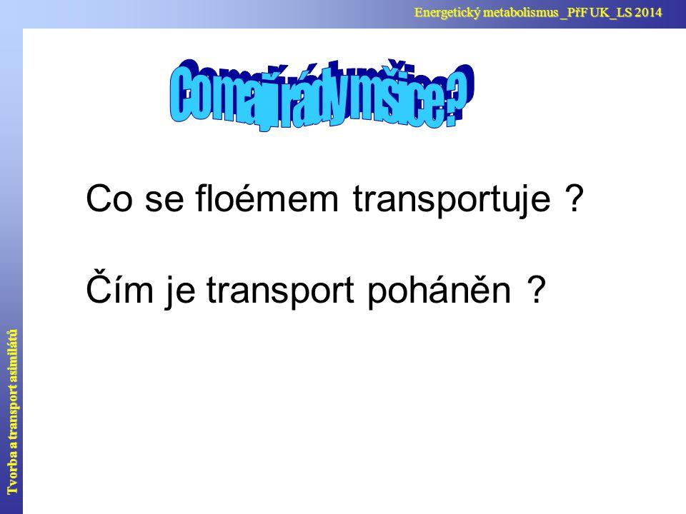 Co se floémem transportuje Čím je transport poháněn