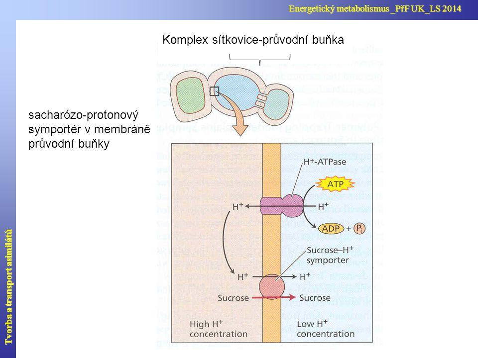 Komplex sítkovice-průvodní buňka
