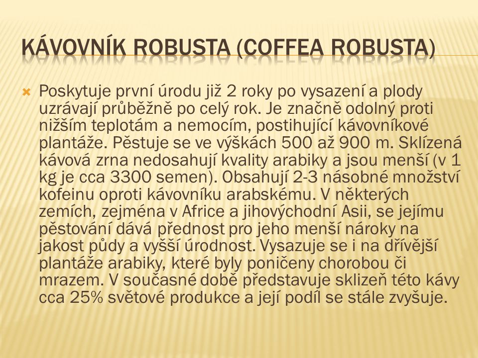 Kávovník robusta (Coffea robusta)