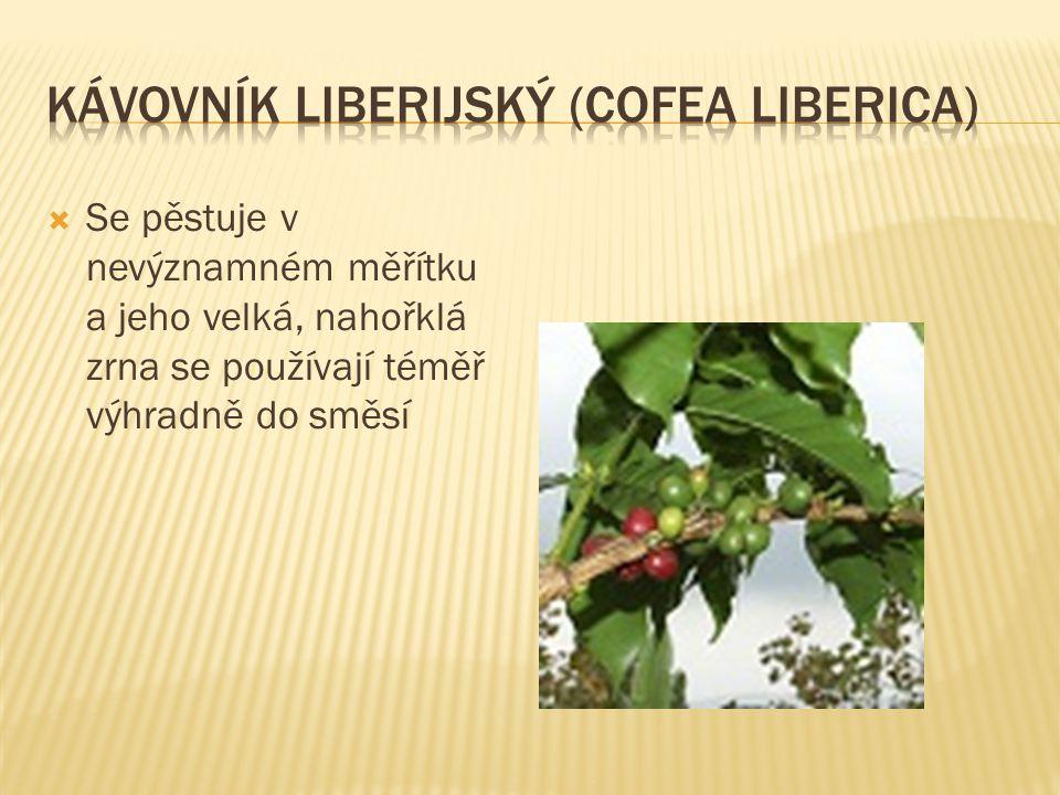Kávovník liberijský (Cofea liberica)