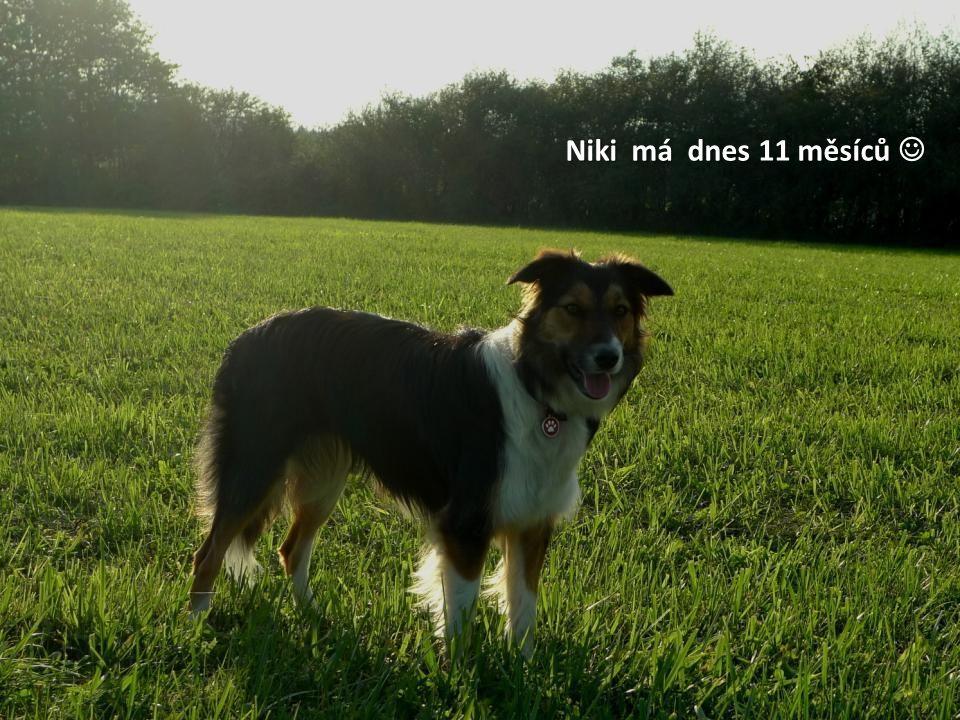 Niki má dnes 11 měsíců 