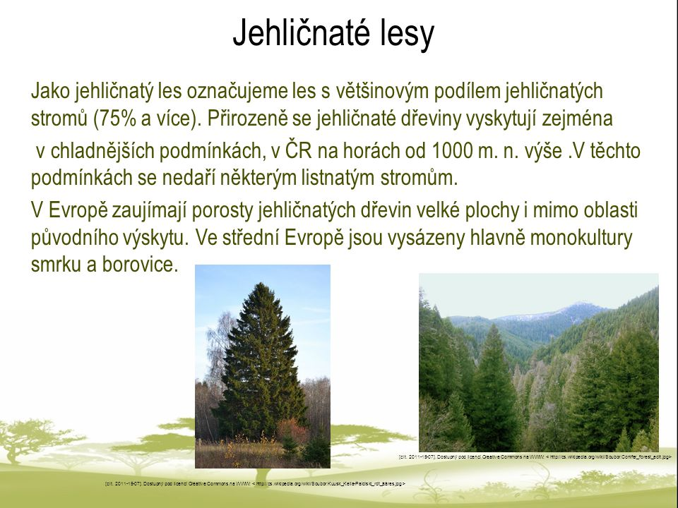 Jehličnaté lesy