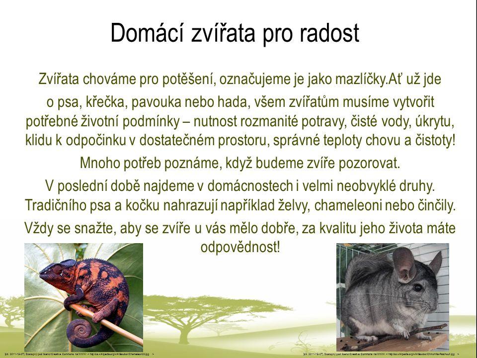 Domácí zvířata pro radost